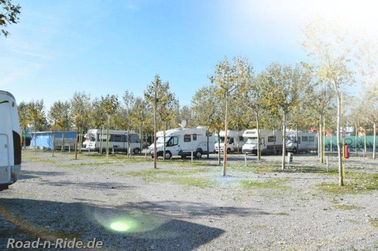 2 palme camp1227962071..jpg