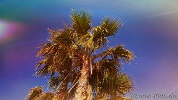 palme 1904287114..jpg